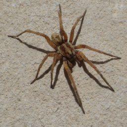Уничтожение пауков в Перми